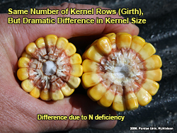 Kernel size differences due to N deficiency