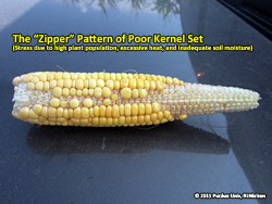 "The ""zipper"" pattern of poor kernel set"